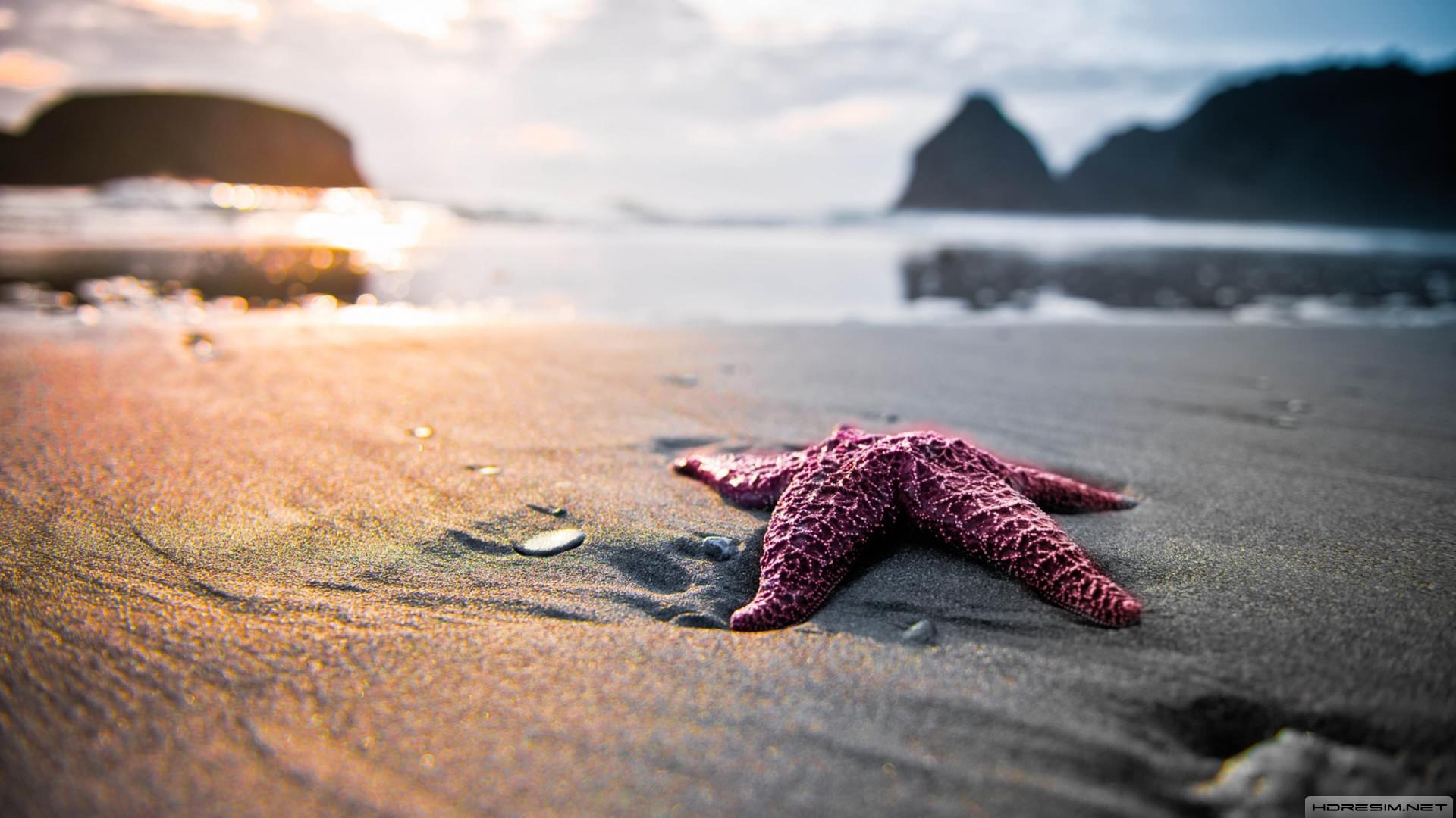 Deniz Yıldızı Ve Yoksullar